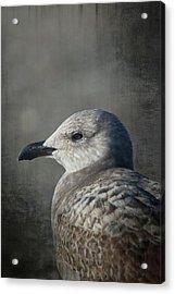 The Gull Acrylic Print by Karol Livote