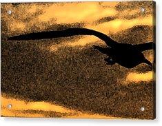 The Gull Acrylic Print by William Jones