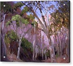 The Gum Grove Catalina Acrylic Print