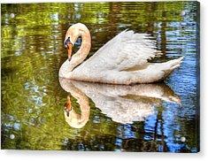 The Hammy Swan Acrylic Print