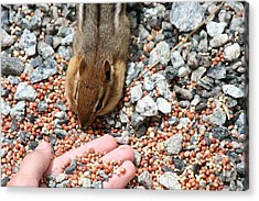 The Hand Out Acrylic Print by Randy Morehouse