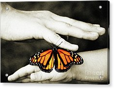 The Hands And The Butterfly Acrylic Print by Andee Design