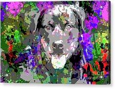 The Happy Rottweiler Acrylic Print by Jon Neidert