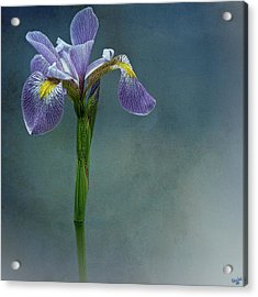 The Harlem Meer Iris Acrylic Print by Chris Lord