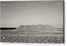 The Harvest Acrylic Print by Wim Lanclus