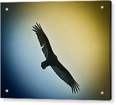 The Hawk Acrylic Print by Bill Cannon