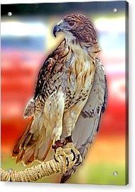 The Hawk Acrylic Print by Joseph Williams