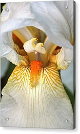 Acrylic Print featuring the photograph The Heart Of A Bearded Iris by Sheila Brown