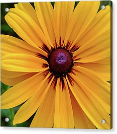 Acrylic Print featuring the photograph The Heart Of A Flower by Monte Stevens