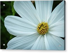 Acrylic Print featuring the photograph The Heart Of The Daisy by Monte Stevens