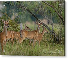 Acrylic Print featuring the photograph The Herd by Charles McKelroy