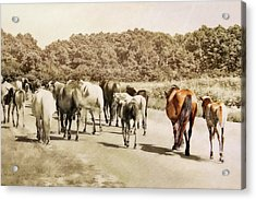 The Herd Acrylic Print by JAMART Photography