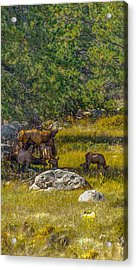 The Herd Keeper Acrylic Print