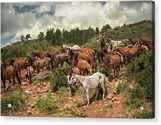 The Herd Acrylic Print