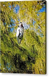 The Heron's Whiskers Acrylic Print