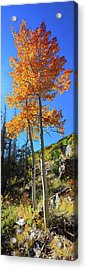 Acrylic Print featuring the photograph The Hillside - Panorama by Shane Bechler