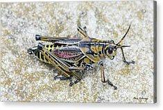 The Hopper Grasshopper Art Acrylic Print by Reid Callaway