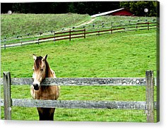 The Horse And The Red Barn . R5913 Acrylic Print by Wingsdomain Art and Photography
