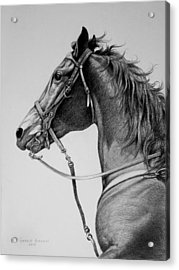 Acrylic Print featuring the drawing The Horse by Harvie Brown