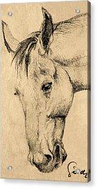 The Horse Portrait Acrylic Print