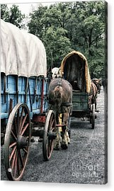 The Horse Train  Acrylic Print by Steven Digman