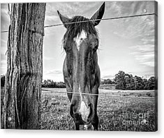 the Horses of Blue Ridge 4 Acrylic Print by Blake Yeager