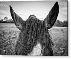 the Horses of Blue Ridge 6 Acrylic Print by Blake Yeager