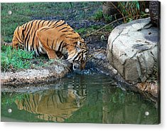 The Humble Acrylic Print by Teresa Blanton