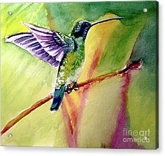 The Hummingbird Acrylic Print