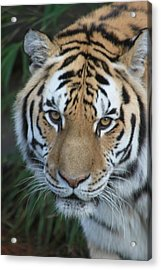 Acrylic Print featuring the photograph The Hunter by Laddie Halupa