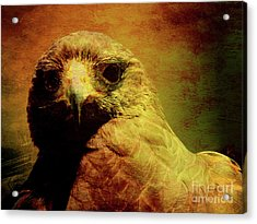 The Hunter . Portrait Of A Hawk . Texture . 40d7877 Acrylic Print by Wingsdomain Art and Photography