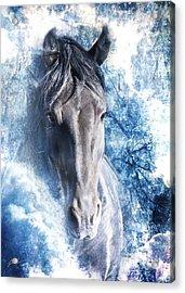 The Ice King Acrylic Print by Jamie Mammano
