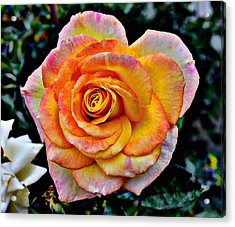 Acrylic Print featuring the mixed media The Imperfect Rose by Glenn McCarthy