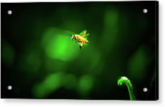 The Incredible Journey Of Mrs. Honeybags Acrylic Print by Mark Andrew Thomas