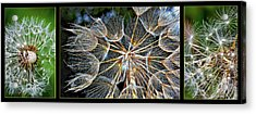 The Inner Weed Triptych Acrylic Print