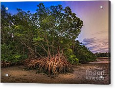 The Interwoven Acrylic Print by Marvin Spates