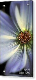 Acrylic Print featuring the photograph The Jewel by Elfriede Fulda