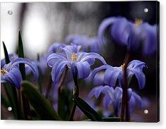 The Joy Of Springtime Acrylic Print