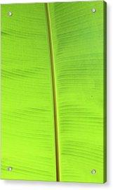 The Jungle Illuminated Acrylic Print