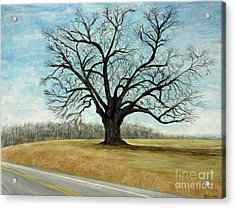 The Keeler Oak Acrylic Print