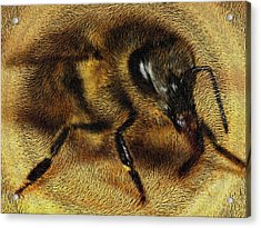 The Killer Bee Acrylic Print