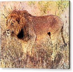 The King Acrylic Print by Ericamaxine Price