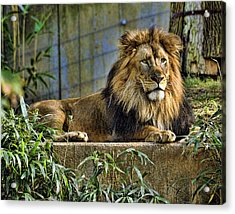 The King Acrylic Print by Keith Lovejoy