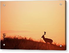 The King Of The Hill Acrylic Print by Roeselien Raimond