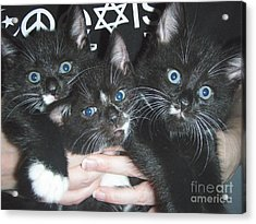 The Kittidiots Acrylic Print by Kristine Nora