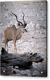 Acrylic Print featuring the digital art The Kudu In Namibia by Ernie Echols