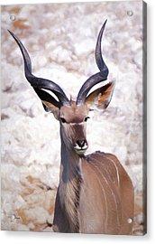 The Kudu Portrait 2 Acrylic Print by Ernie Echols