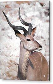 The Kudu Portrait Acrylic Print by Ernie Echols