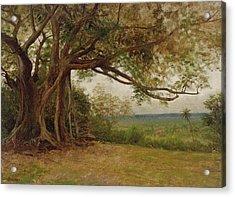 The Landing Of Columbus Acrylic Print by Albert Bierstadt