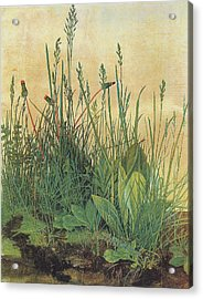 The Large Piece Of Turf Acrylic Print by Albrecht Durer